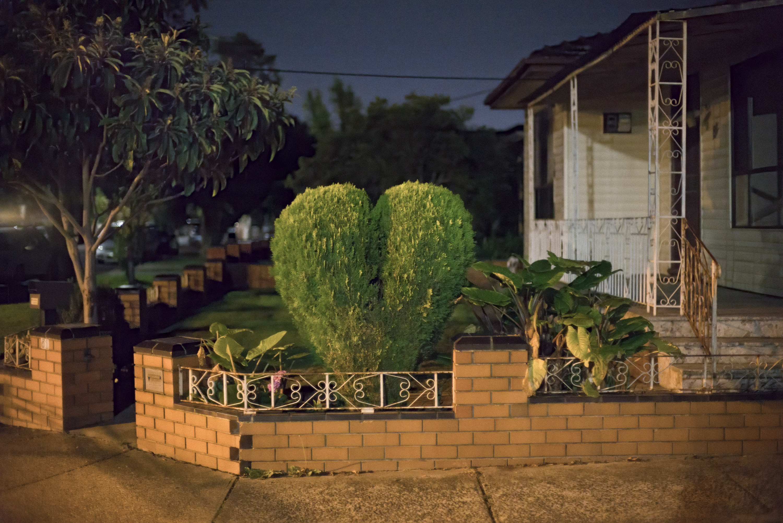 Pender St heart shaped bush